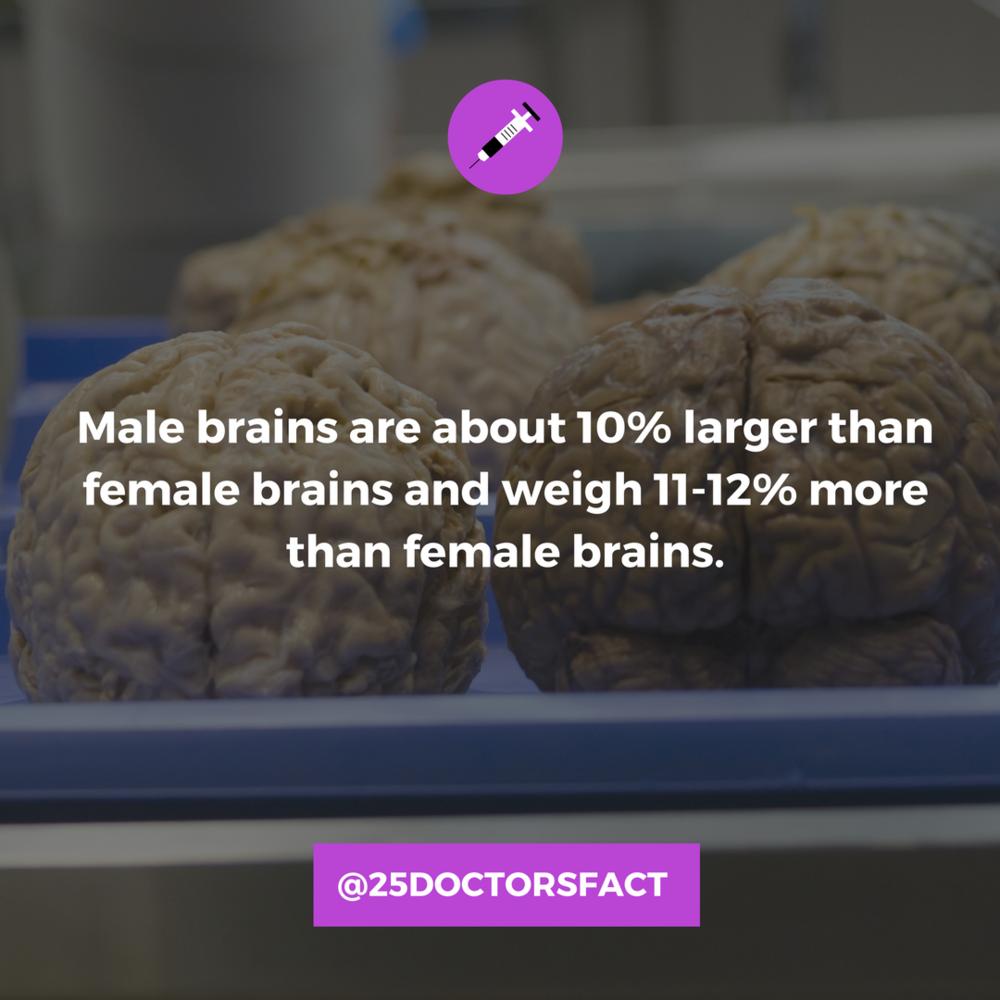 men have bigger brains