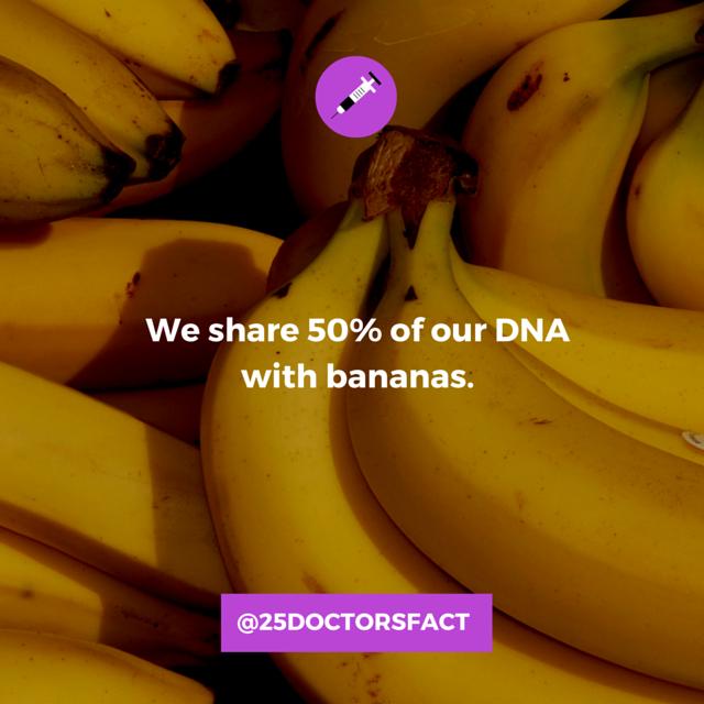 Bananas_DNA.png