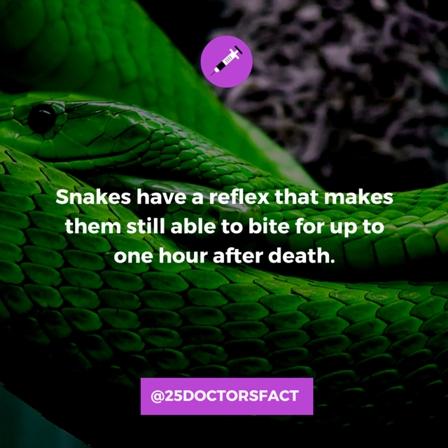 Snakes_Dead_Reflax.png