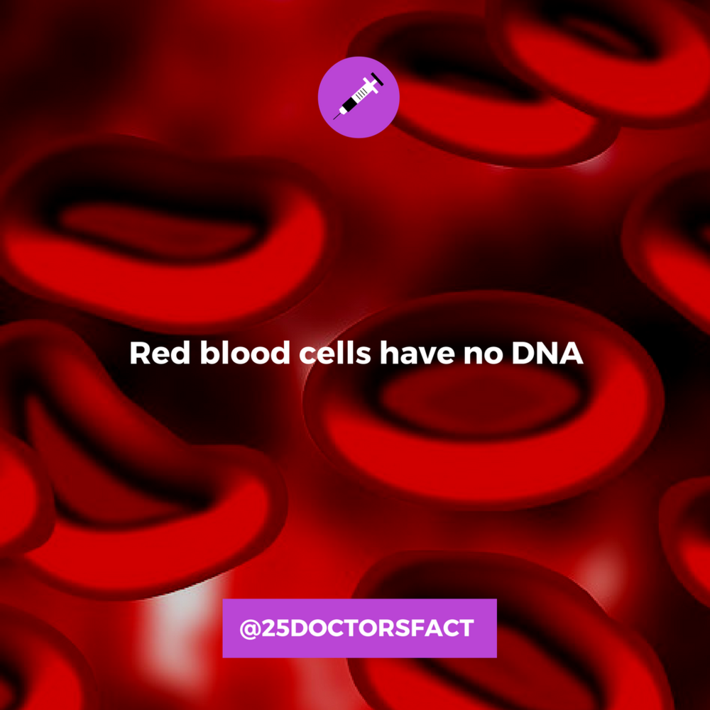 red blood cells have no dna