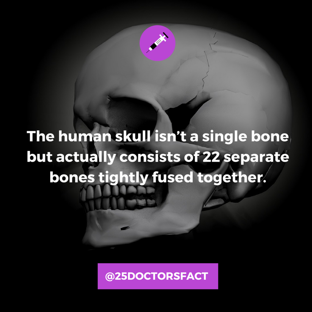 skull bones.png