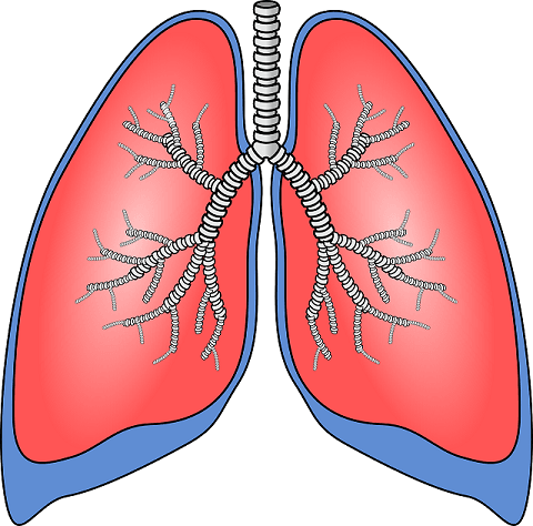 Pneumonia is simply inflammation of the lungs.