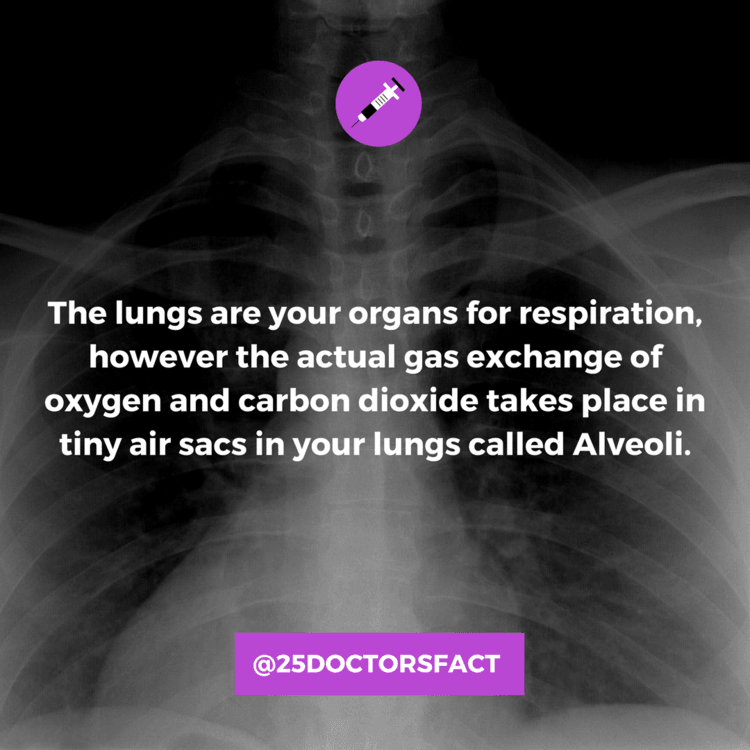 pneumonia-lungs-alveoli