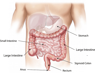 intestines mucus stool