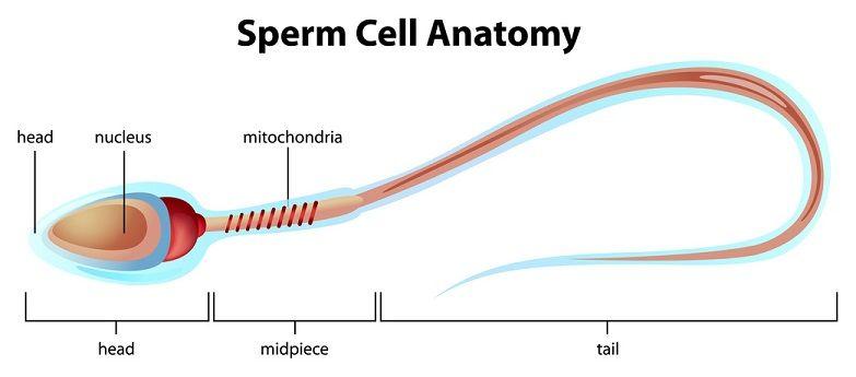 Source: Human-fertility.com