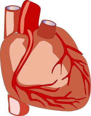 Cardiovascular chest pain
