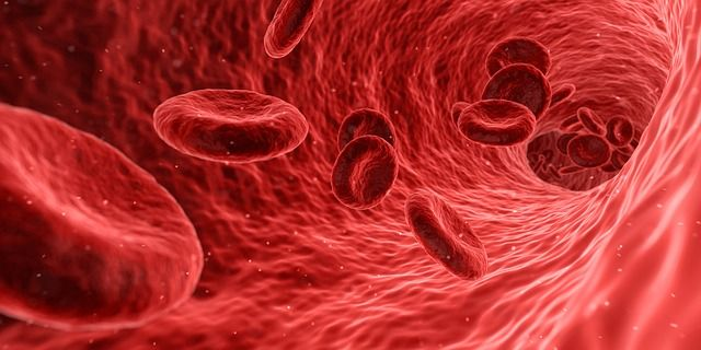 blood cells are made in the bones.jpg