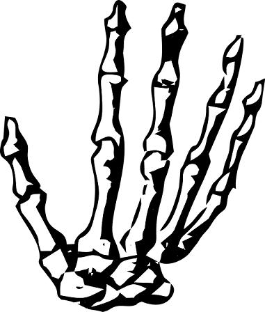 hand bones.png