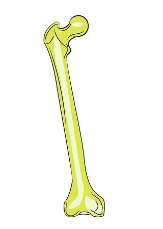 femur longest bone in the body.jpg