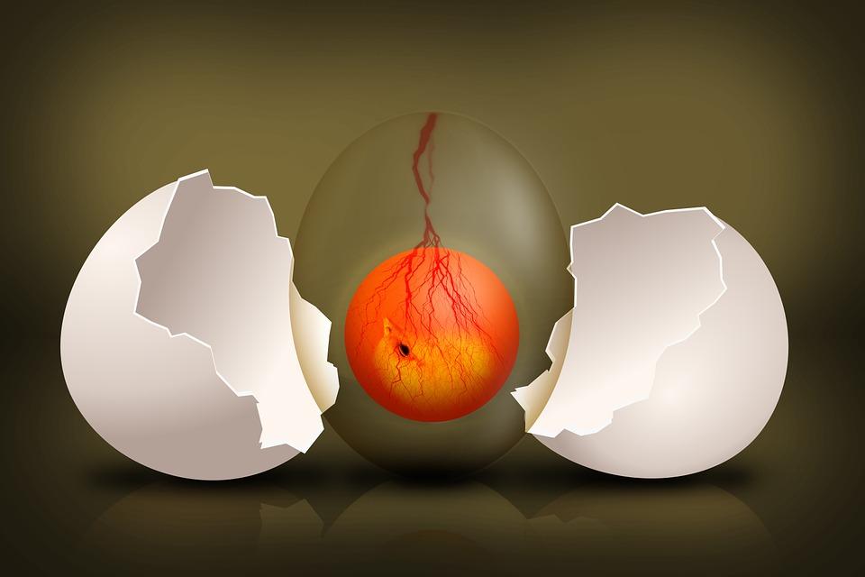 egg composition.jpg