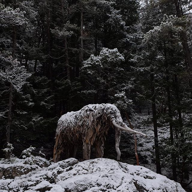 The snow in the forest was magic today! #exploreBC #pnwonderland #nofilter #mournthemastodon