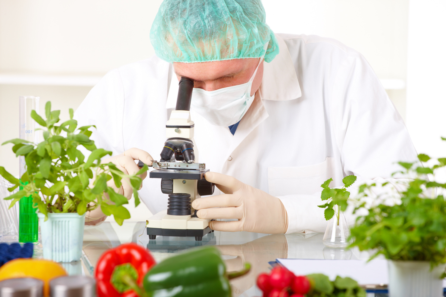 Watch: What are GMO Foods? [VIDEO] — The Rail