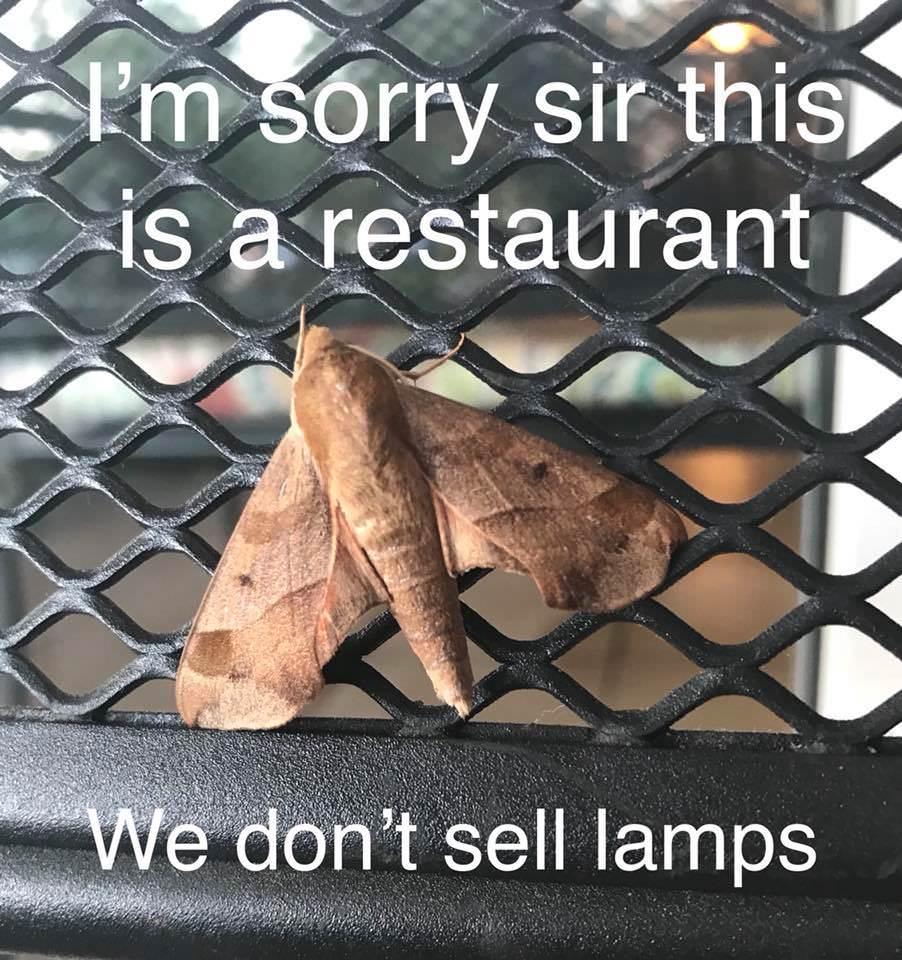 Restaurant Moth Meme #1