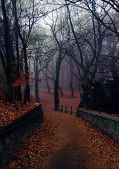 965c94355a5aa202f7f934575ad46668--autumn-fall-autumn-leaves.jpg