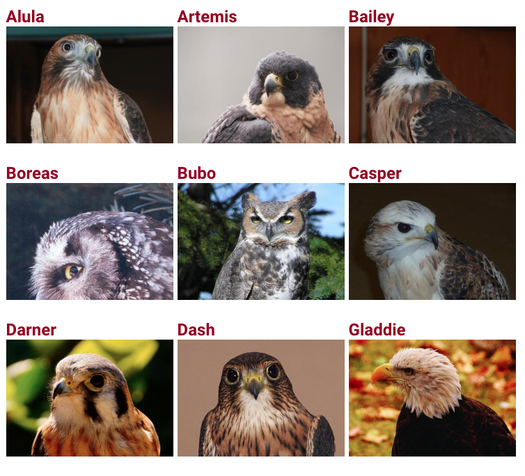 Raptorcenterbirds.png