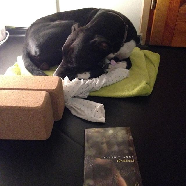 Puppy, literature what éles do you need If you teach yin? :) #yinyoga #yogadog #letitgo #njoy #njoylife