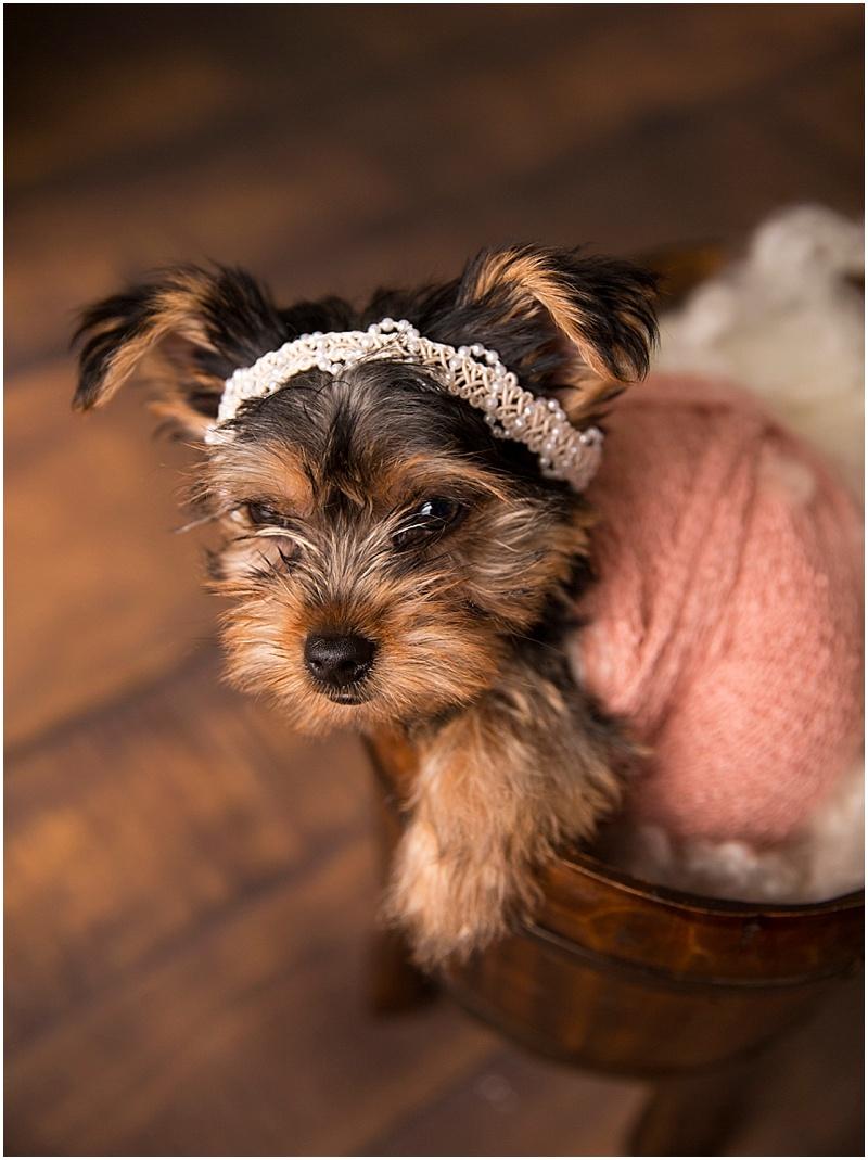Stephanie Tignor Photography | Fredericksburg VA Pet Photographer | Warrenton VA Pet Photographer | Stafford VA Pet Photographer | Pet Photographer | Puppy Photographer