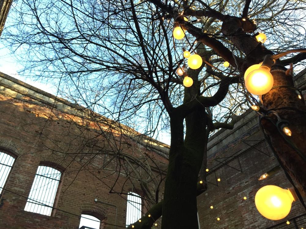 Twilight in The Tree Room1.JPG