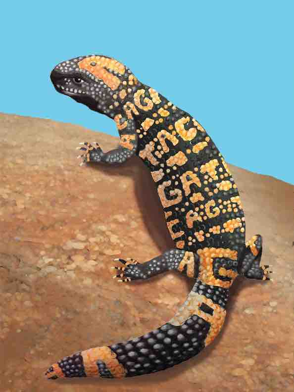 Gila monster genome!