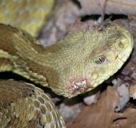 snake fungus.jpg