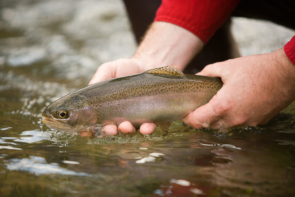Trout Stocked In SE Missouri Lakes.jpg