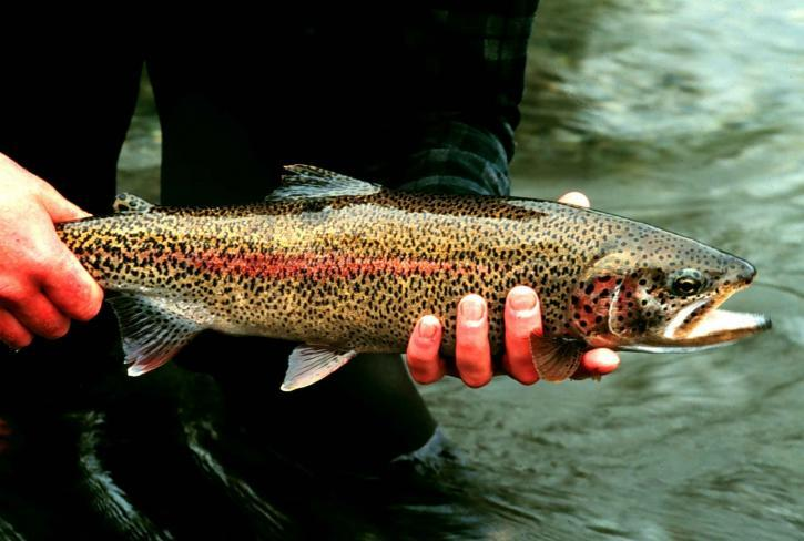 new trout regs on White & Norfork.jpg