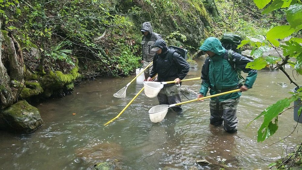 Virginia Brook Trout Relocation Project.jpg