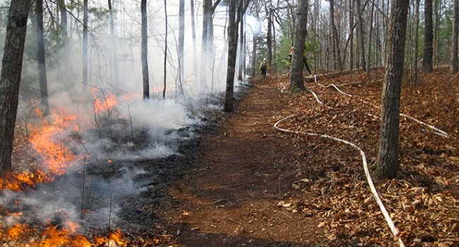 Monongahela National Forest Plans Prescribed Fire.jpg