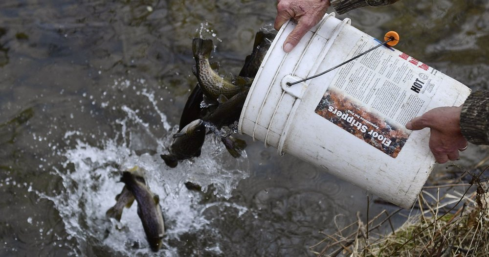 Help Out Pigeon River Trout Stocking.jpg
