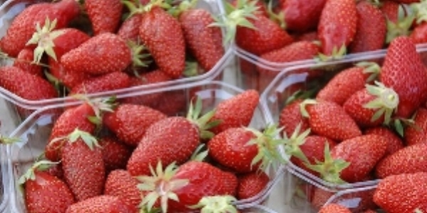 Gariguettes – a super-sweet strawberry variety available in France