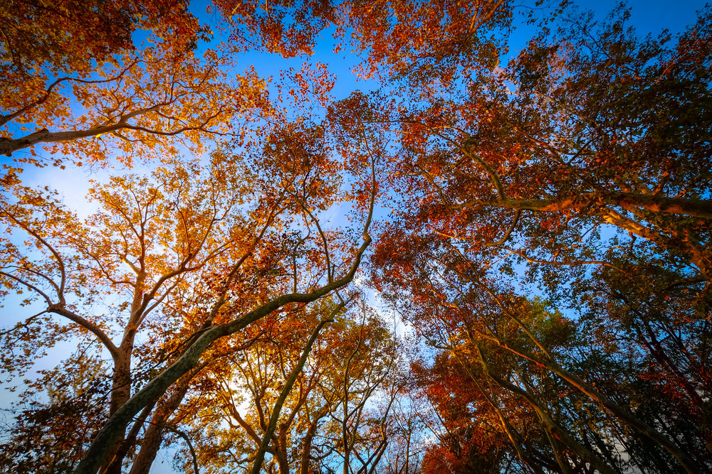 Trees.jpeg