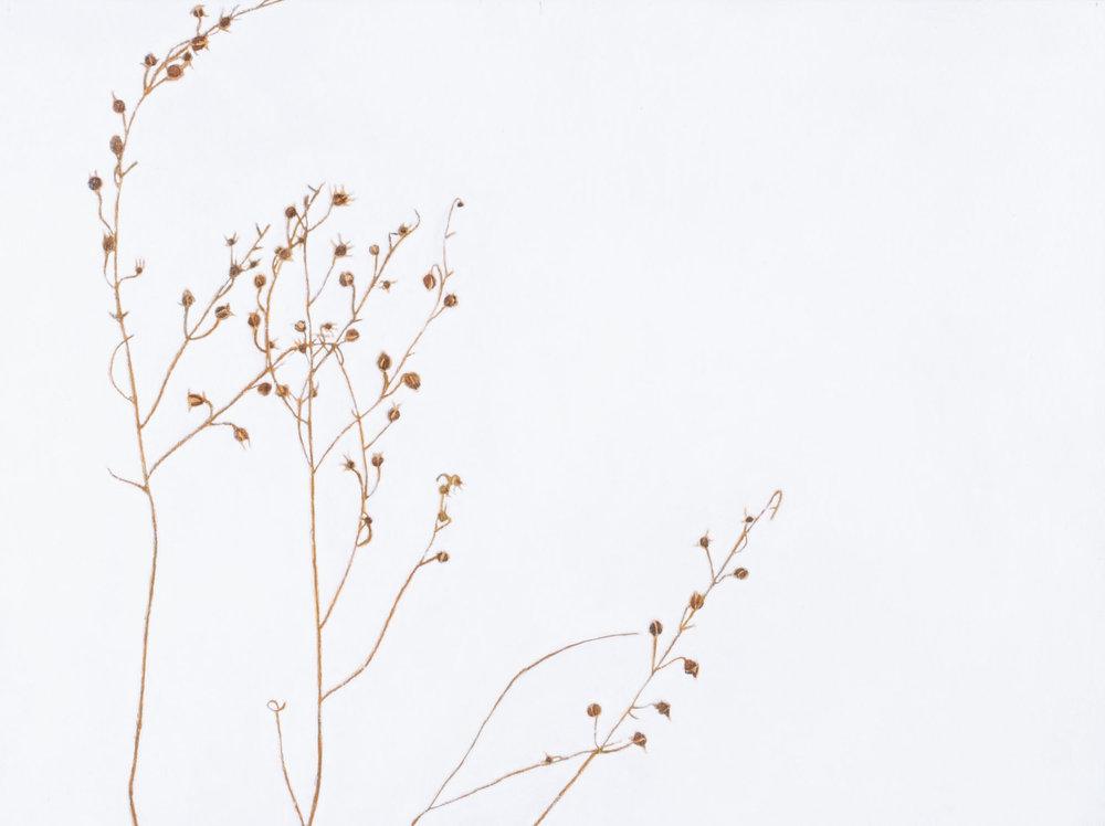 Marsh-Pepper Smartweed