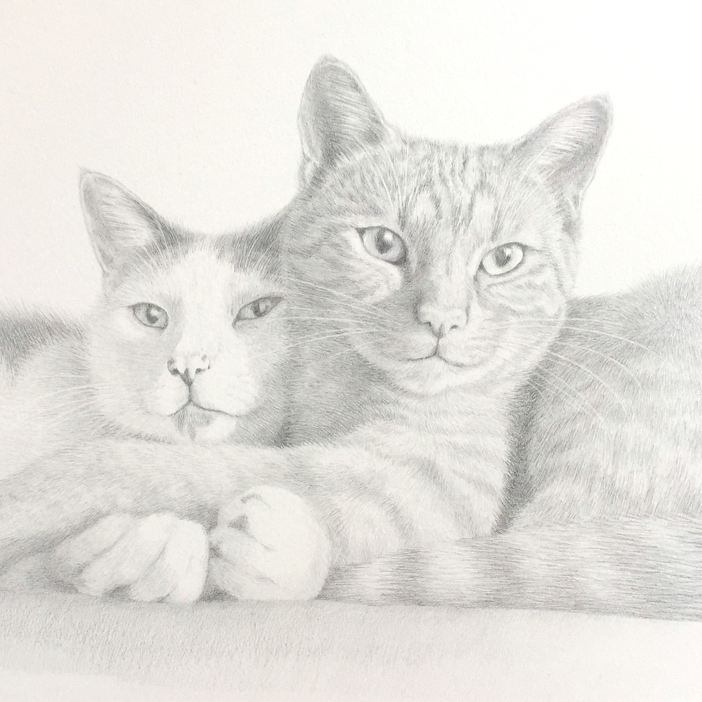 1-cat portrait by Katie Koch-001.JPG