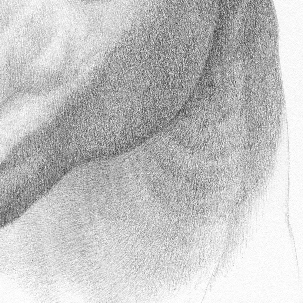 sadie (detail)