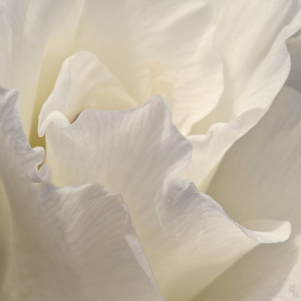 Debby Krim - The Colors of White Photography 3.jpg