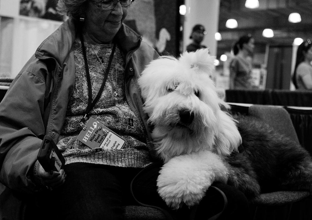 sheep dog kristie lee B&W.jpg