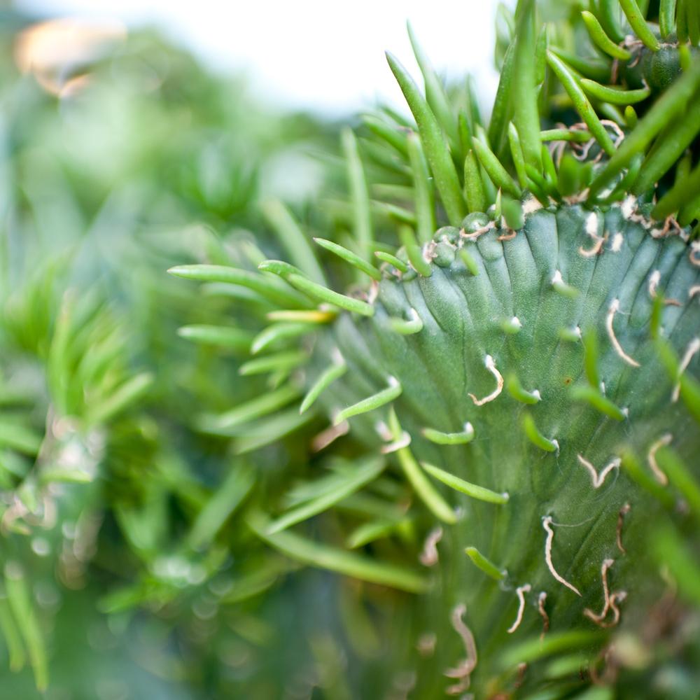 cactus_2.jpg
