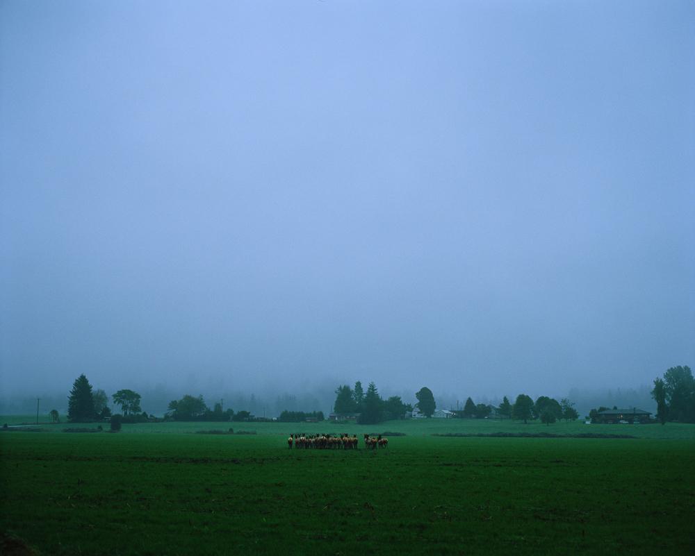 Siuslaw Forest 003.jpg