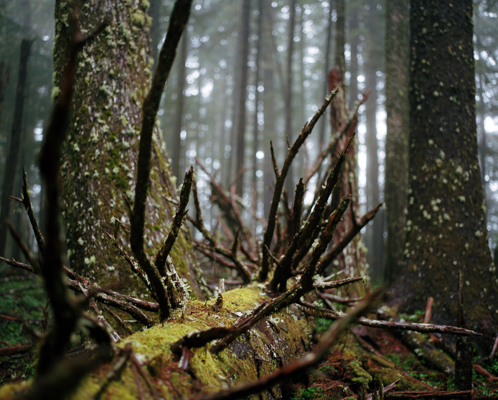 Siuslaw Forest 004.jpg