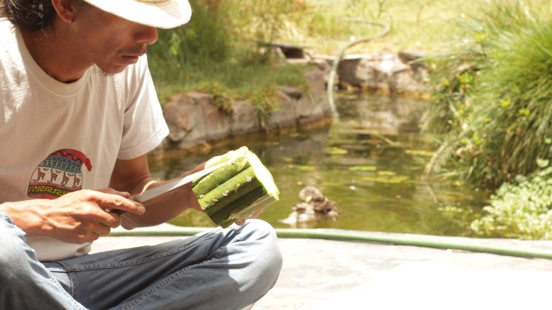 A Shaman preparing Huachuma