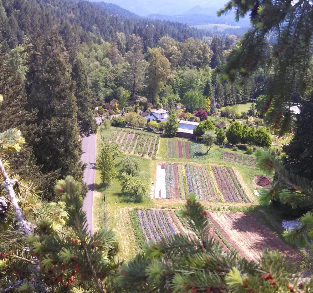 This field holds seven blocks of beds for both vegetables and herbs. There's a small vineyard in the upper left corner and our wash/pack shed in the bottom right corner, just outside of view.