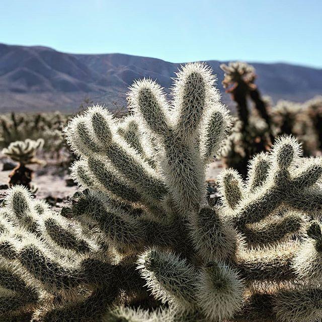 #nature #travel #cactus #cactus🌵 #desert #roadtripusa
