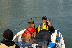 service dog.jpeg