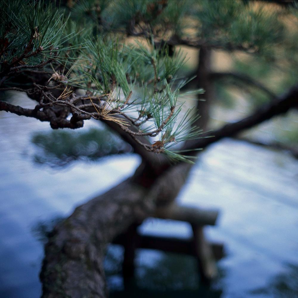 pine 1800a.jpg