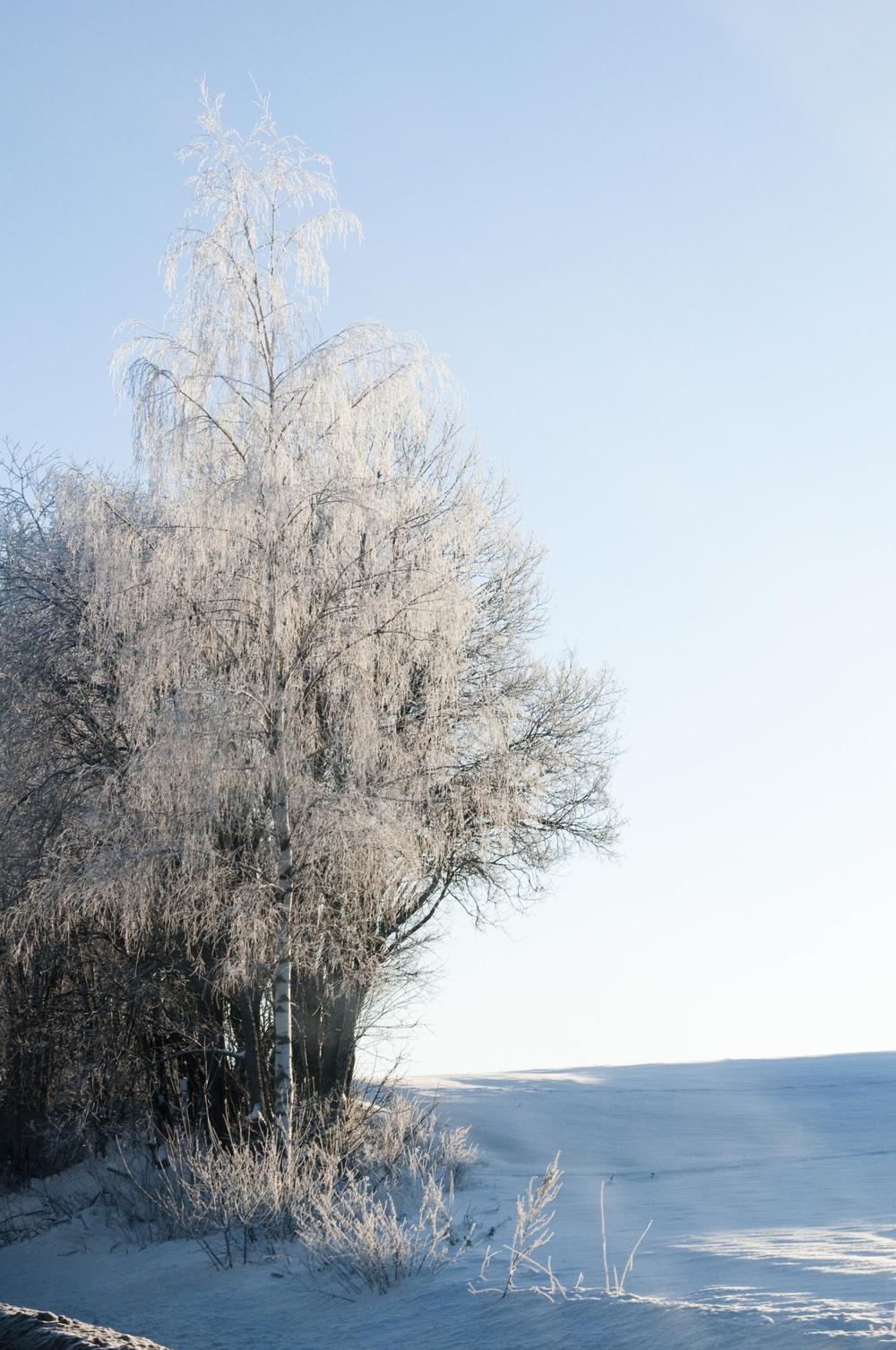 Fantastiske lyse vinterdager - ja takk!
