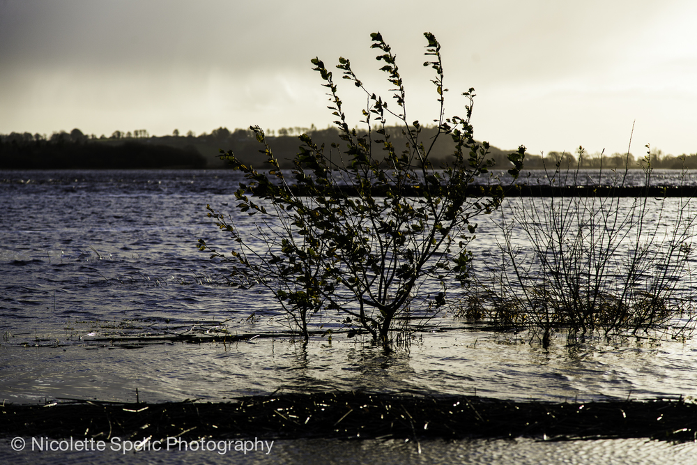 december_floodings-556.jpg