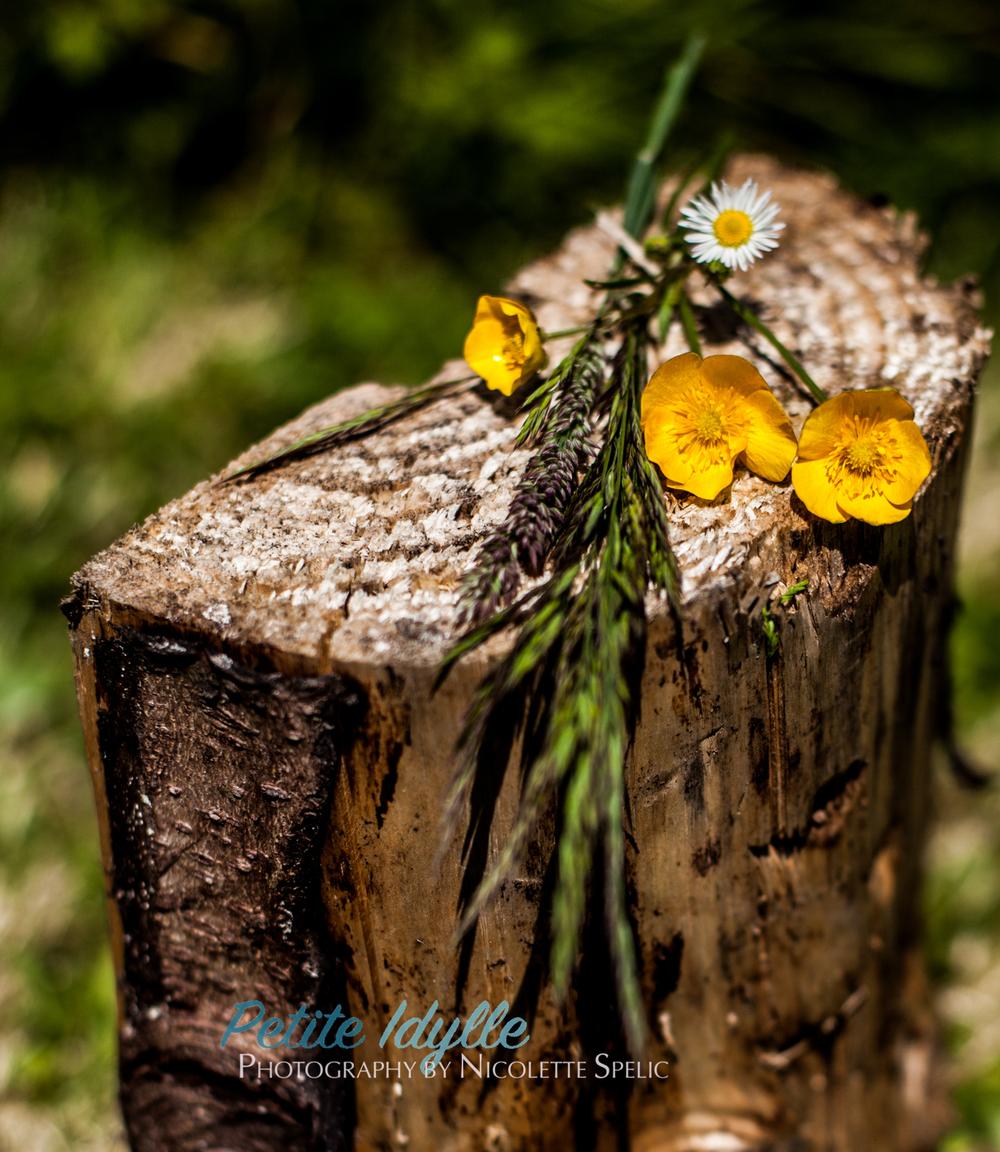 summer_garden-121.jpg