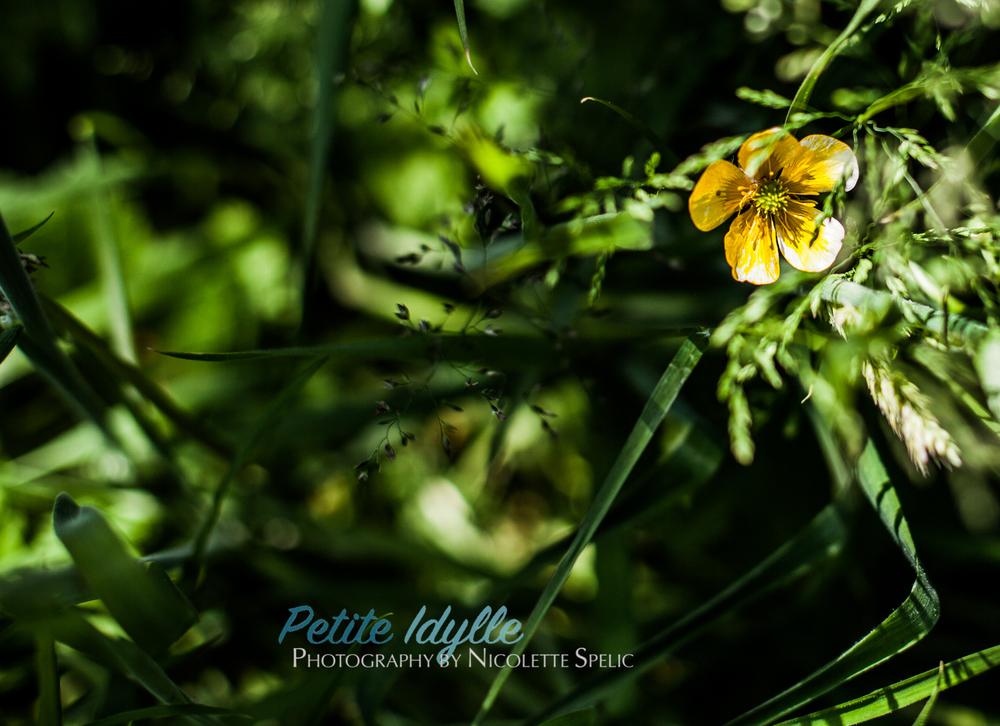summer_garden-71.jpg