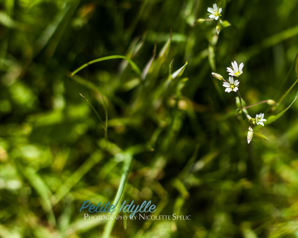 summer_garden-51.jpg