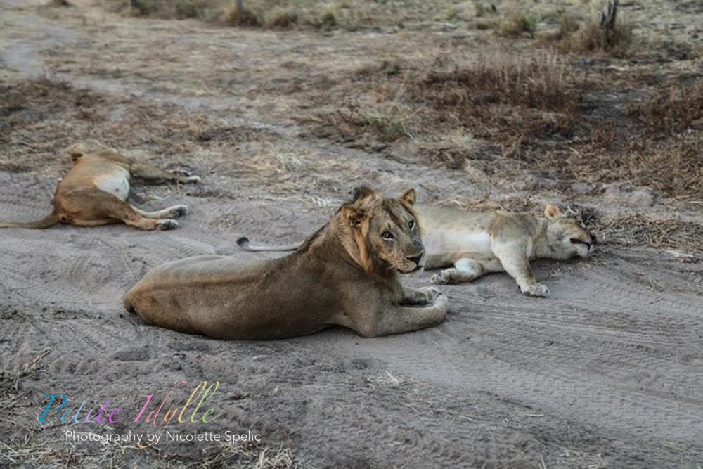 animals_august_2015-26.jpg